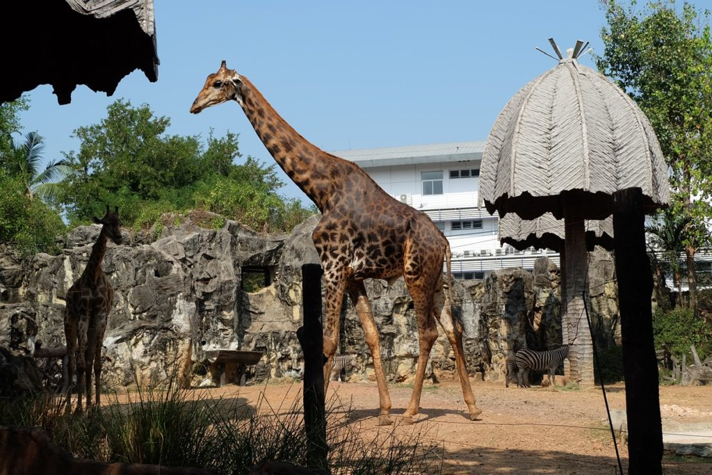 """เที่ยวส่งท้ายปีที่ """"สวนสัตว์ดุสิต"""" ก่อนปิดตำนานสวนสัตว์กลางกรุง"""