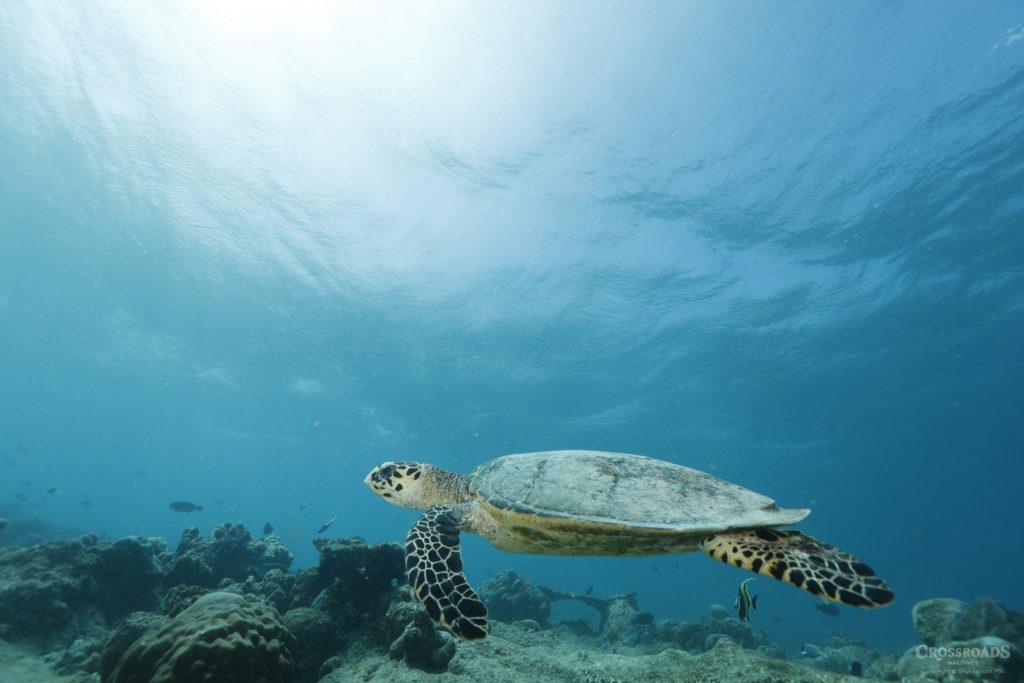 7 กิจกรรม สัมผัสความมหัศจรรย์ ใต้ท้องทะเลมัลดีฟส์