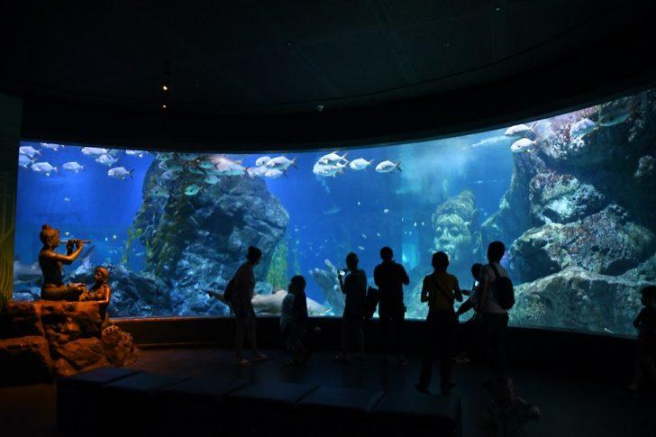 ชมสัตว์น้ำกว่าหมื่นชีวิต ณ Sea Life Bangkok อะควาเรียมที่ใหญ่ที่สุดในไทย